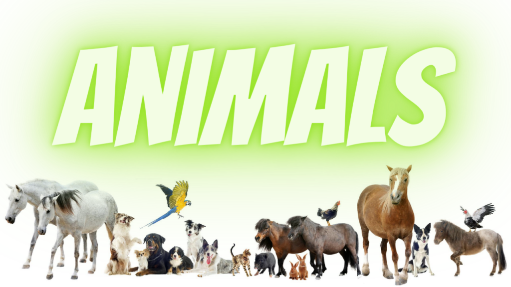 Animals Course Image