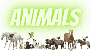 Animals Course Image